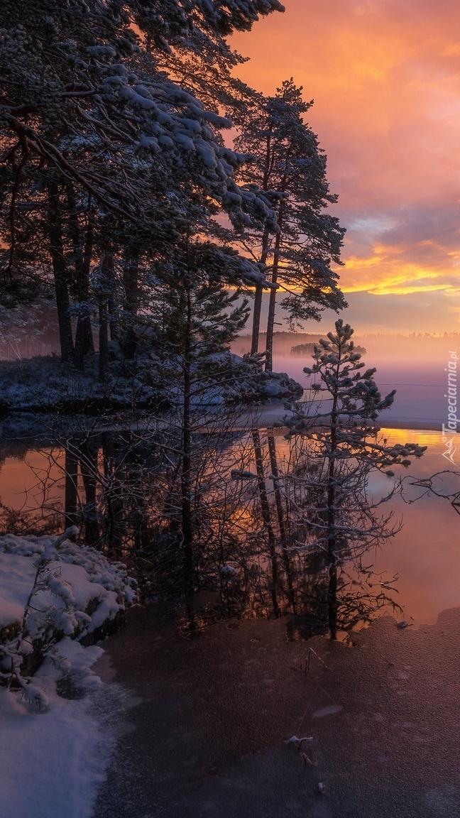 Ośnieżone drzewa nad jeziorem