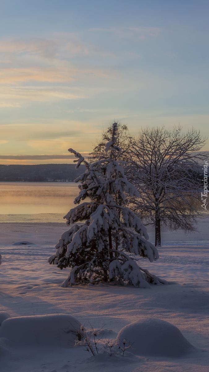Ośnieżone drzewa nad jeziorem Glafsfjorden