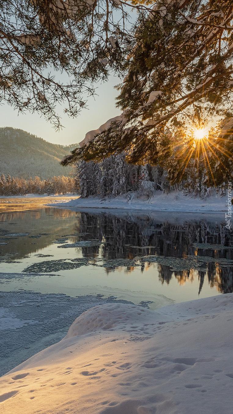 Ośnieżone drzewa nad rzeką w słonecznych promieniach