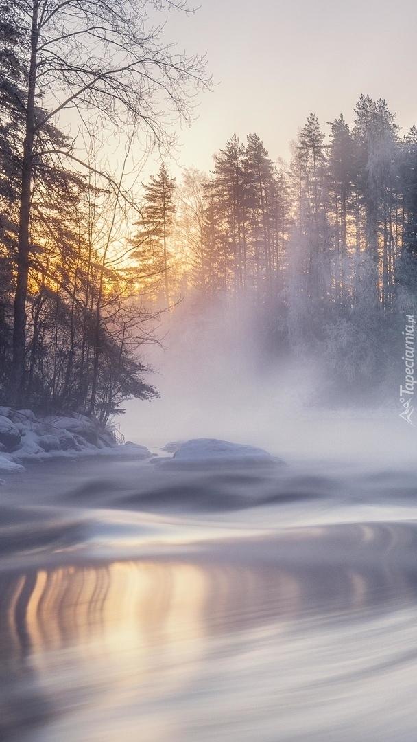 Ośnieżone drzewa nad zamgloną rzeką
