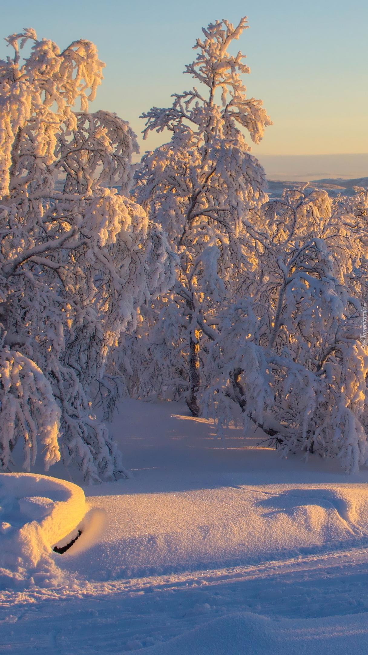 Ośnieżone drzewa przy drodze