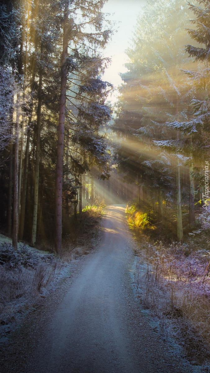 Ośnieżone drzewa przy leśnej drodze
