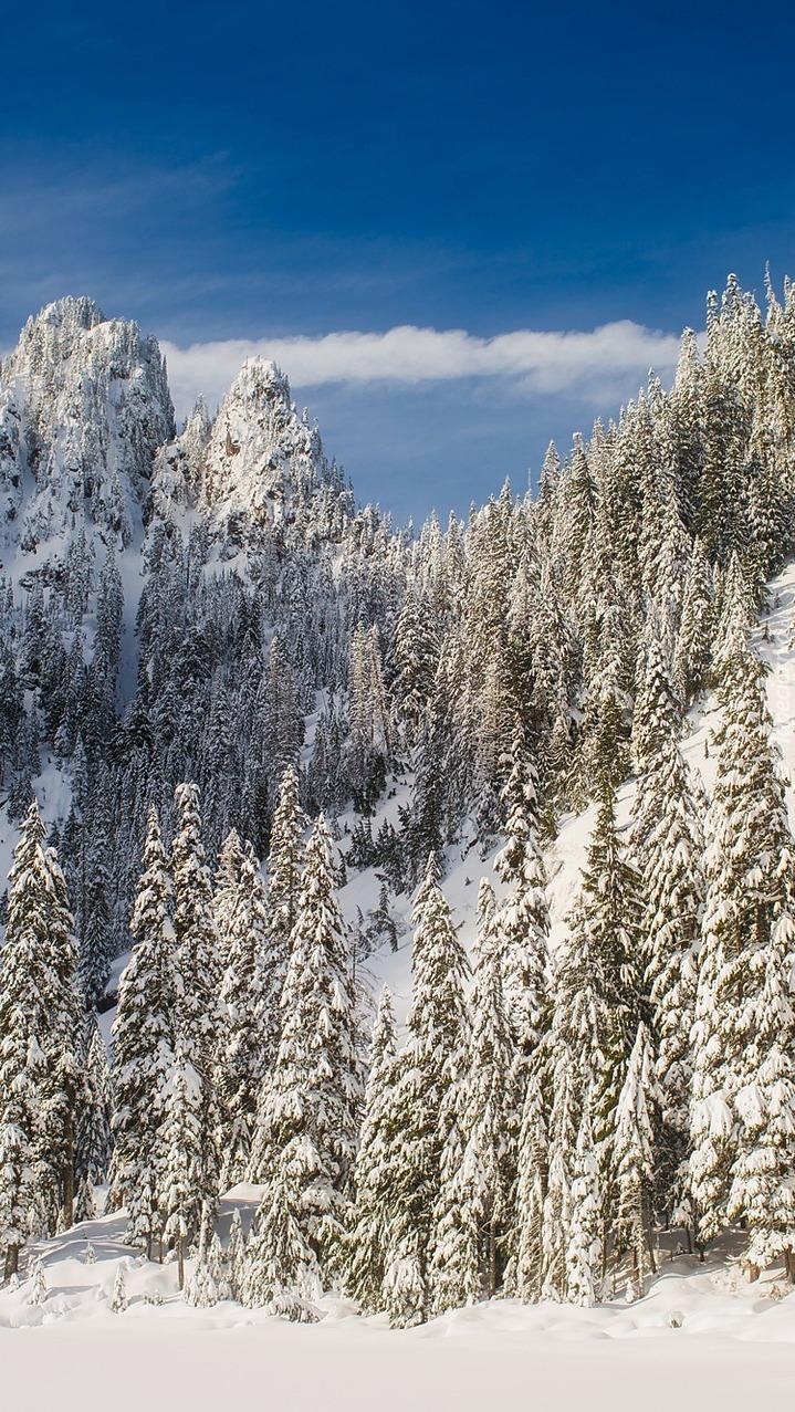 Ośnieżone drzewa w górach