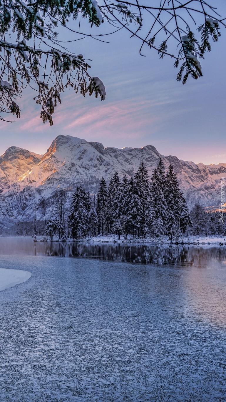 Ośnieżone drzewa w górach nad jeziorem Almsee