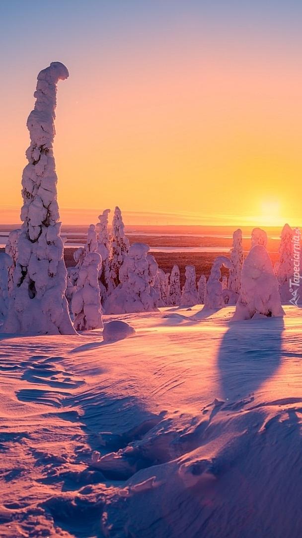 Ośnieżone drzewa w zachodzącym słońcu