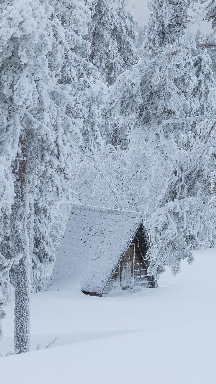 Ośnieżone drzewami i dom w zaspach