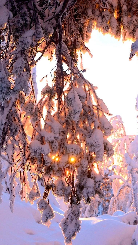 Ośnieżone gałązki w promieniach słońca