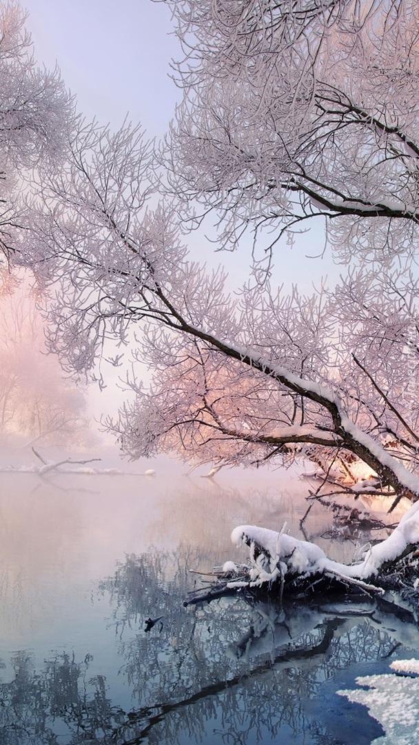 Ośnieżone gałęzie drzewa nad rzeką