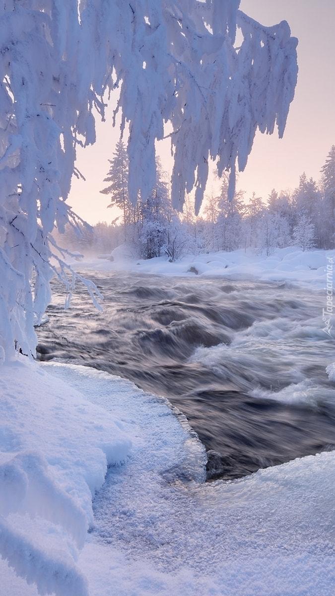 Ośnieżone gałęzie nad rzeką