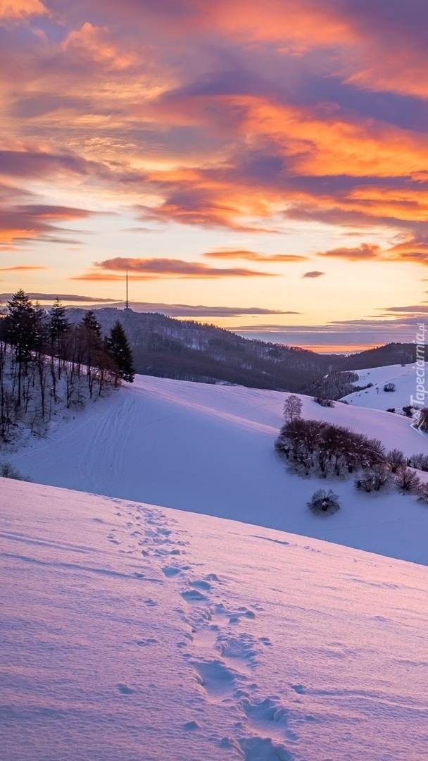Ośnieżone wzgórza Kaiserstuhl