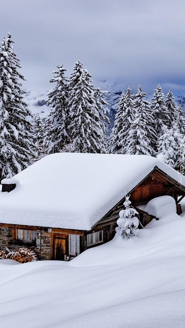 Ośnieżony dom pod lasem