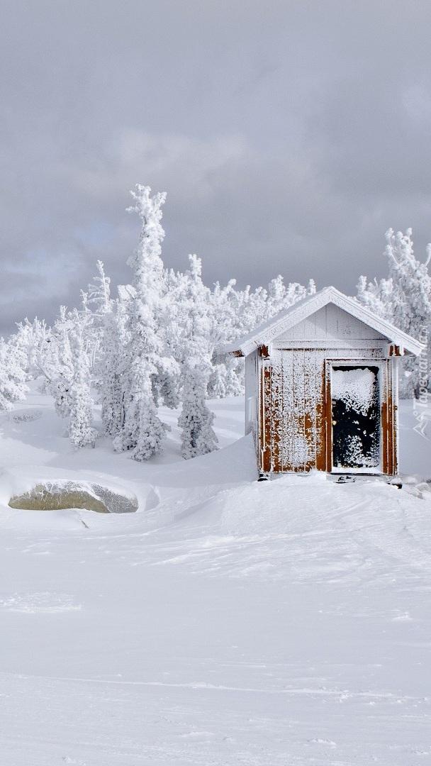 Ośnieżony domek i drzewa