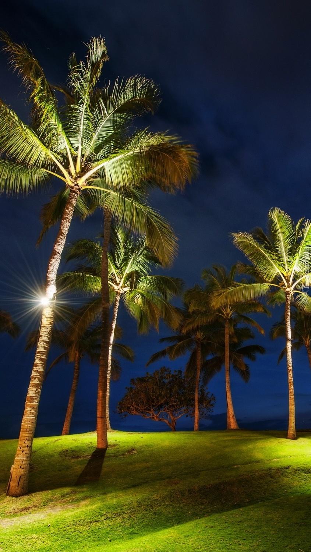 Oświetlone palmy nocą