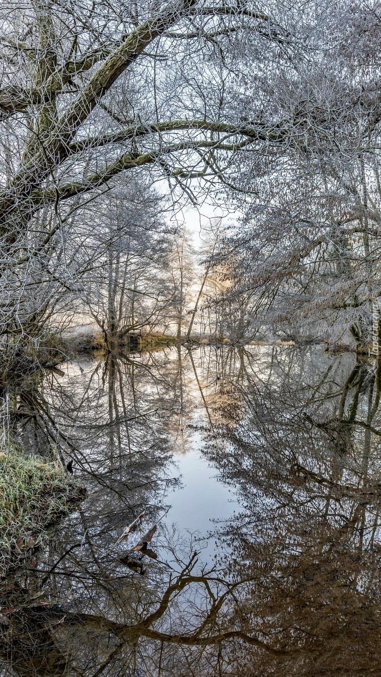 Oszronione drzewa nad rzeką
