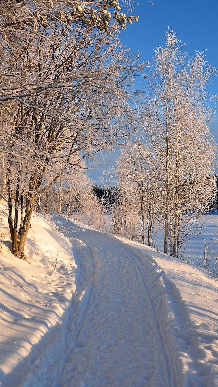 Oszronione drzewa nad zaśnieżoną drogą