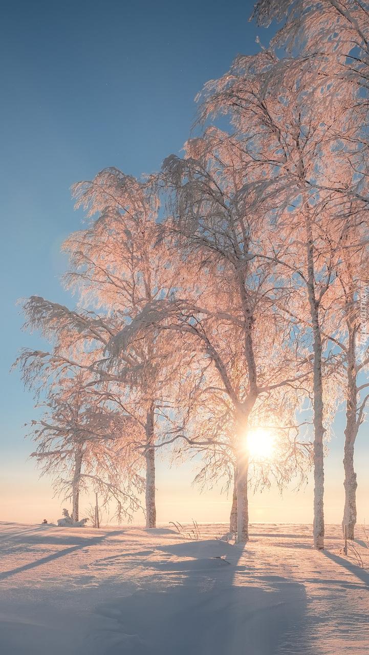 Oszronione drzewa w blasku słońca