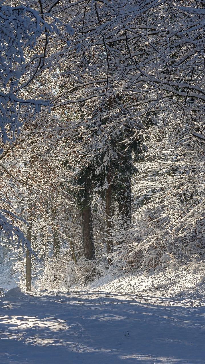 Oszronione drzewa w lesie