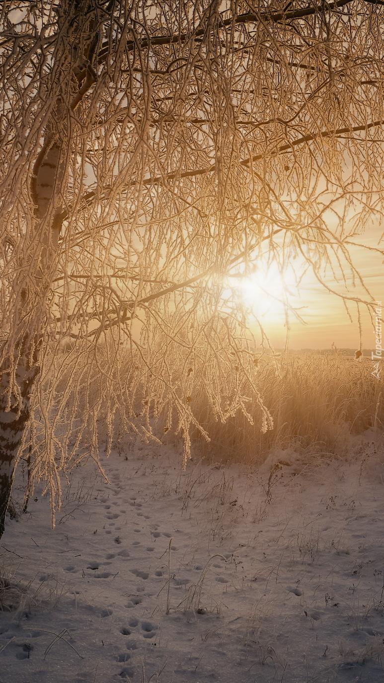 Oszronione drzewa w słońcu