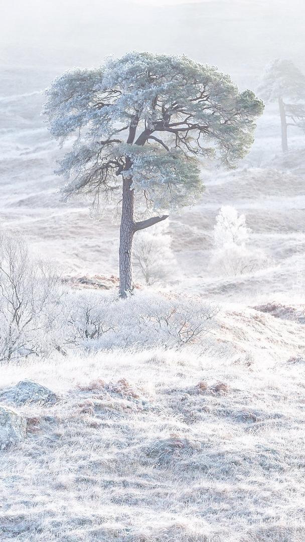 Oszronione drzewo
