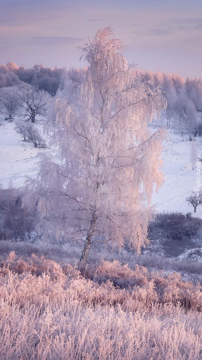 Oszronione drzewo i trawa