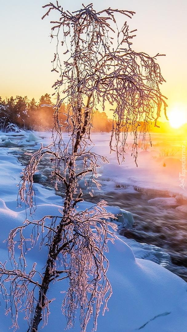 Oszronione drzewo nad rzeką