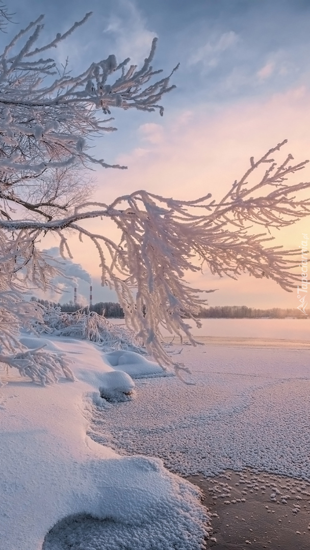 Oszronione gałęzie nad jeziorem Svyatoye