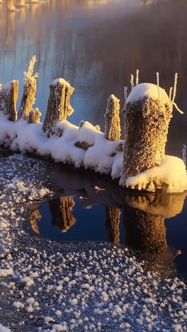 Oszronione kołki w rzece