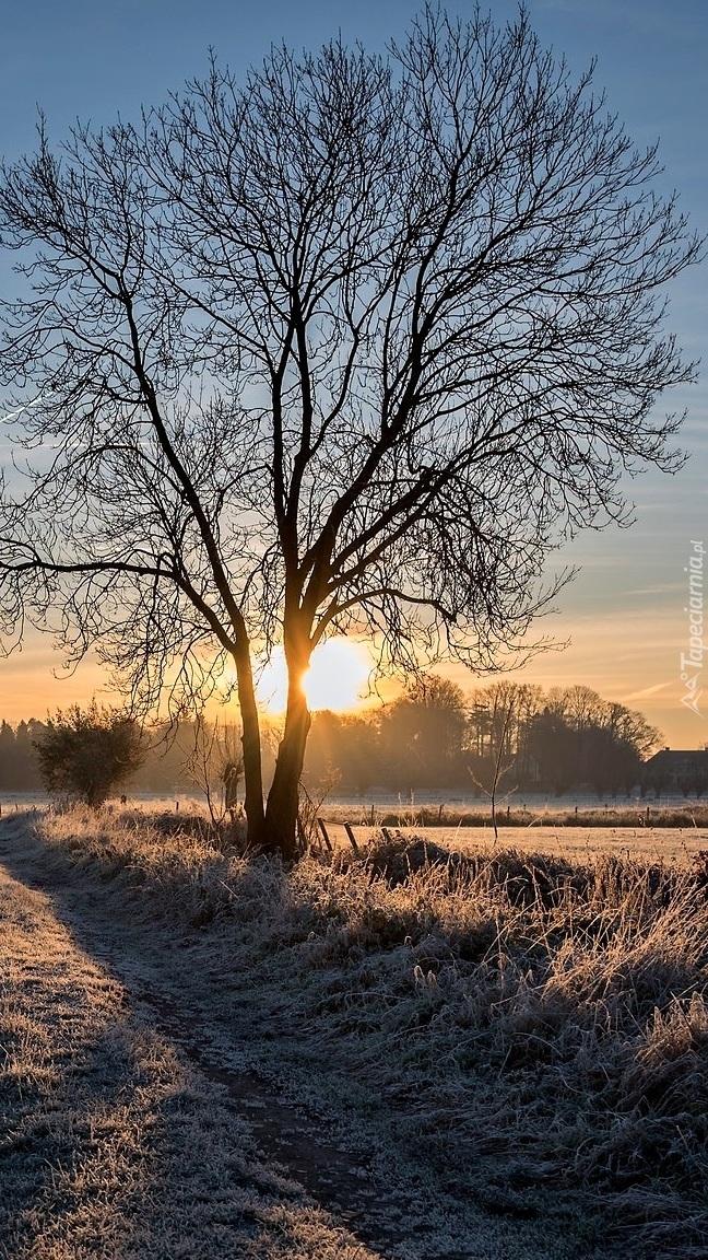 Oszronione pole o wschodzie słońca