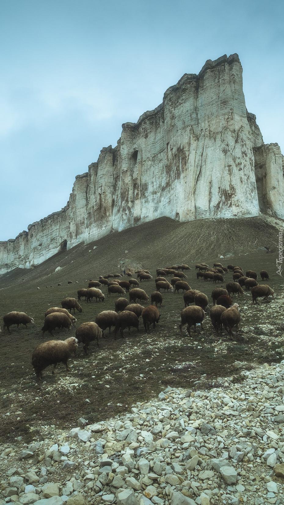 Owce u podnóża góry Ak-Kaja