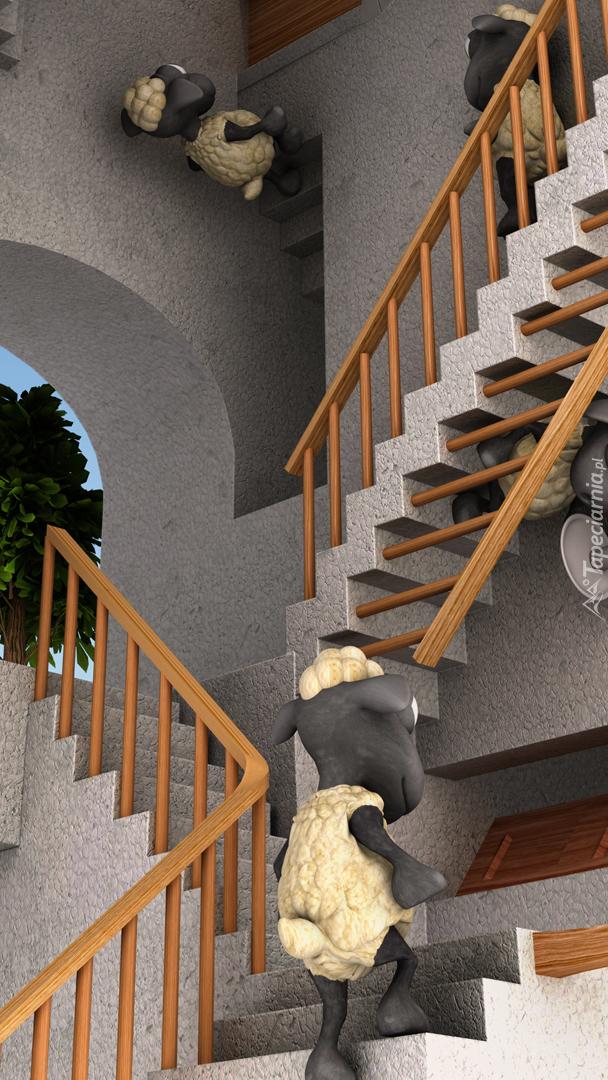 Owieczki na schodach