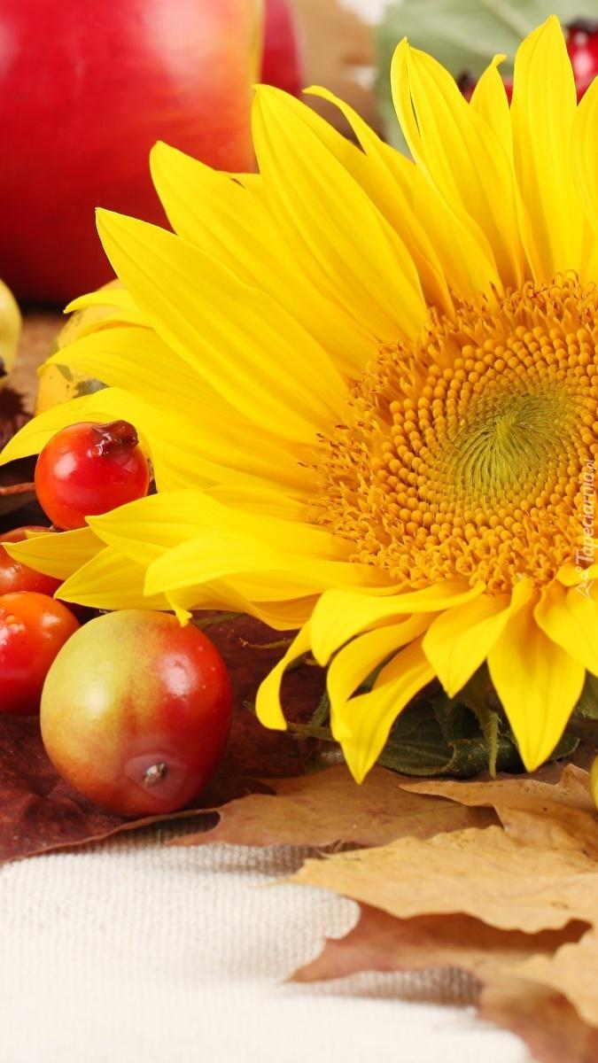 Owoce przy słoneczniku