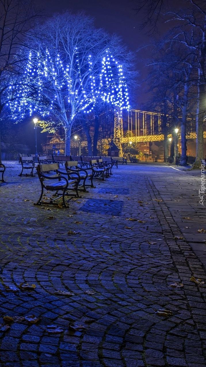 Ozdobione i oświetlone drzewa nocą obok ławek