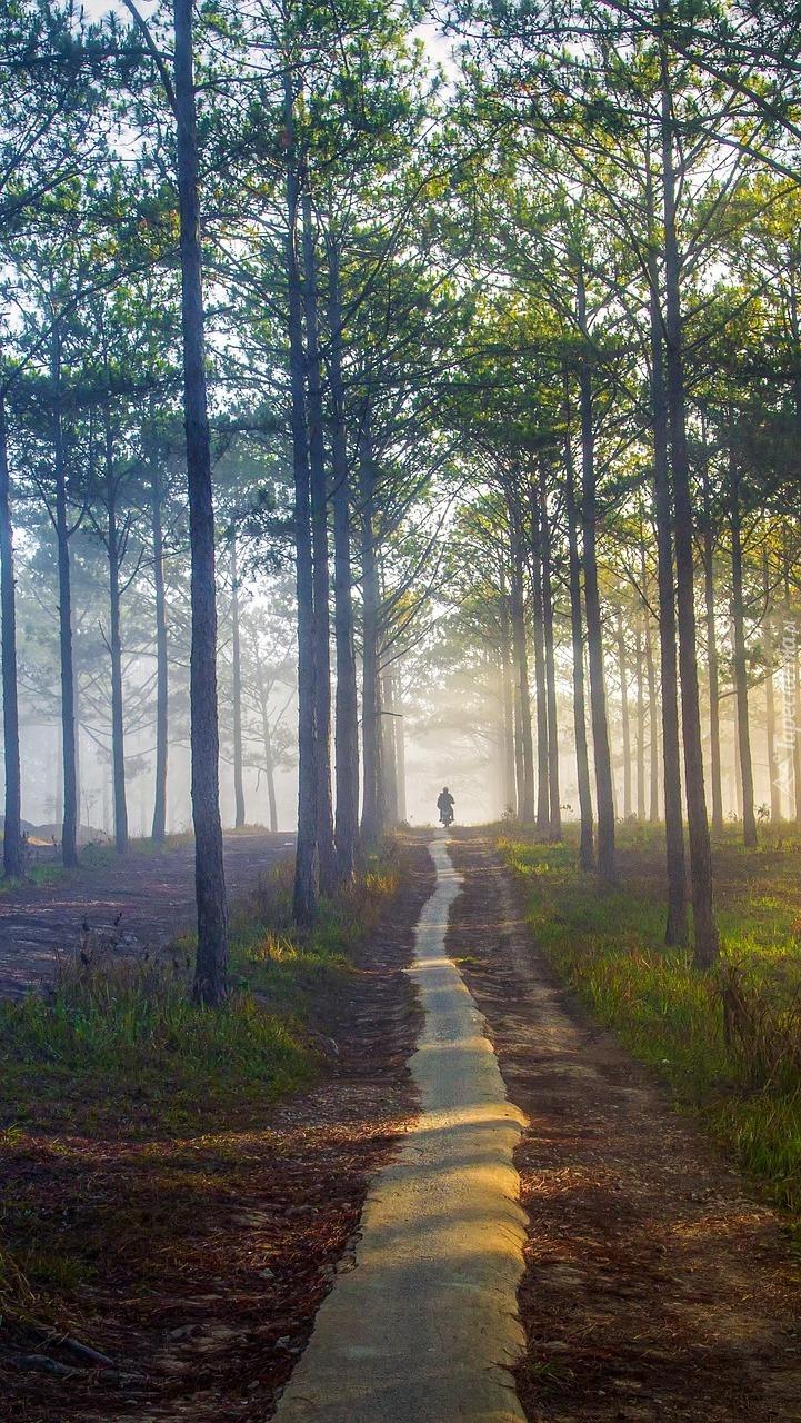 Padające światło na leśną drogę