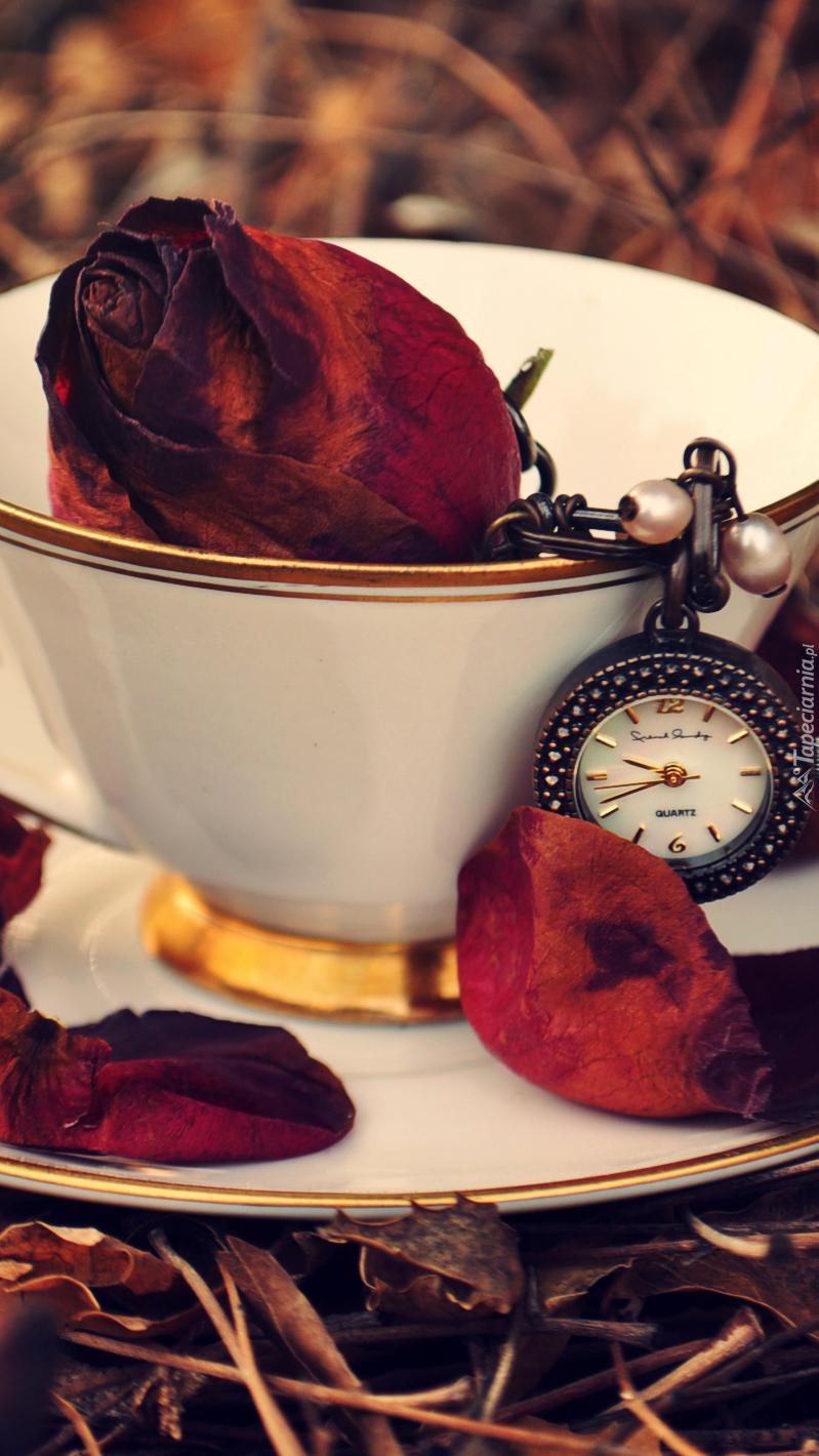Pąk róży i zegarek w filiżance