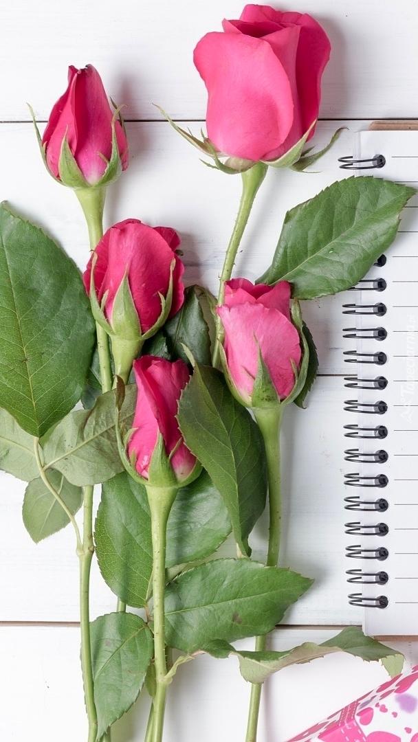 Pąki czerwonych róż