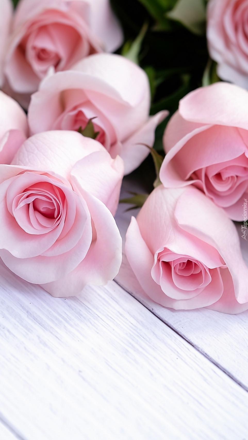 Pąki jasnoróżowych róż