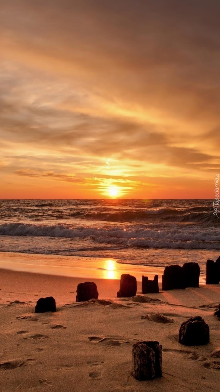Pale na brzegu morza o zachodzie słońca
