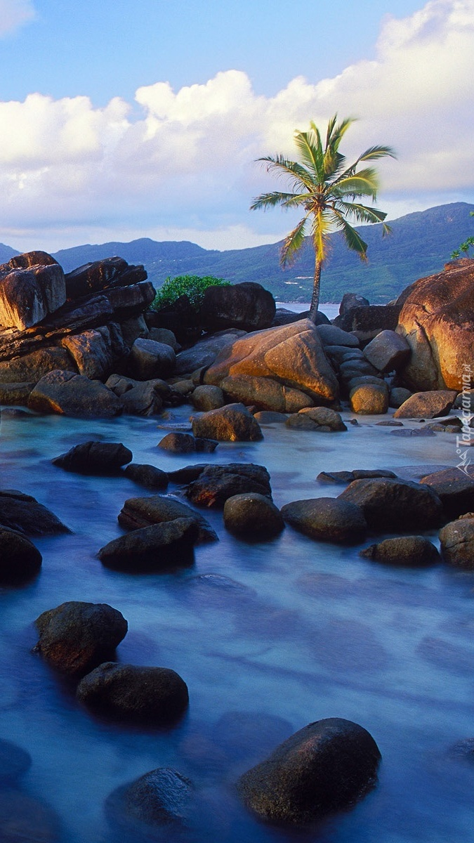 Palma na skałach nad morzem