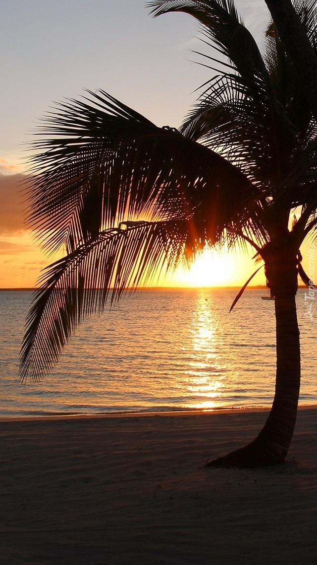 Palma na tle zachodzącego słońca