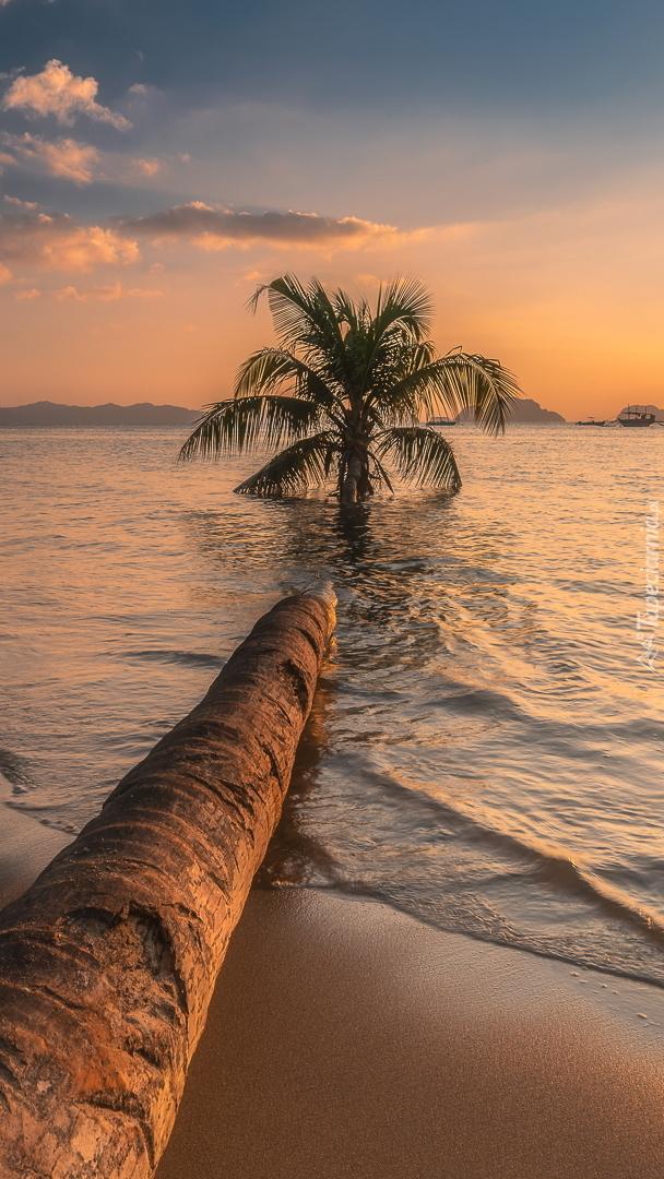 Palma zanurzona w morzu