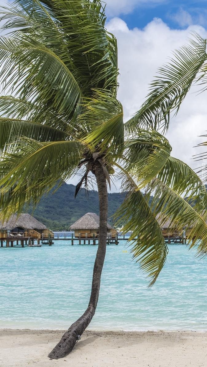 Palmy i domki w Bora-Bora