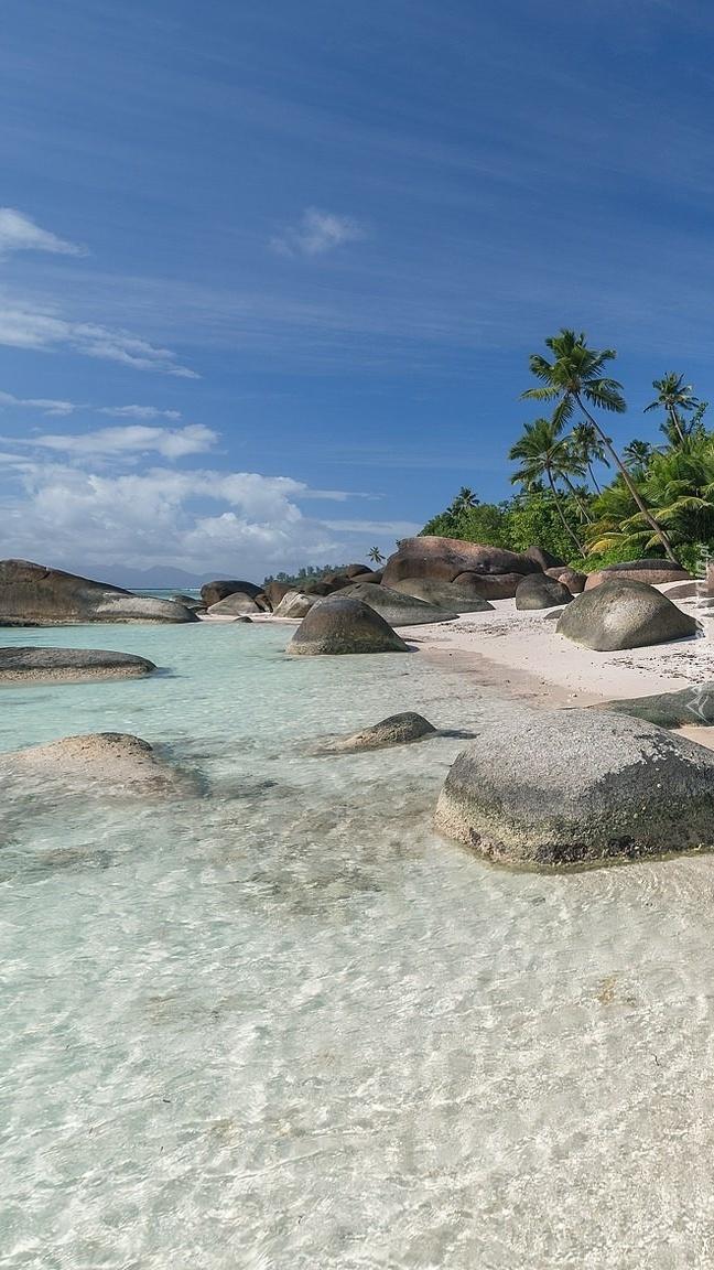 Palmy i kamienie na brzegu morza