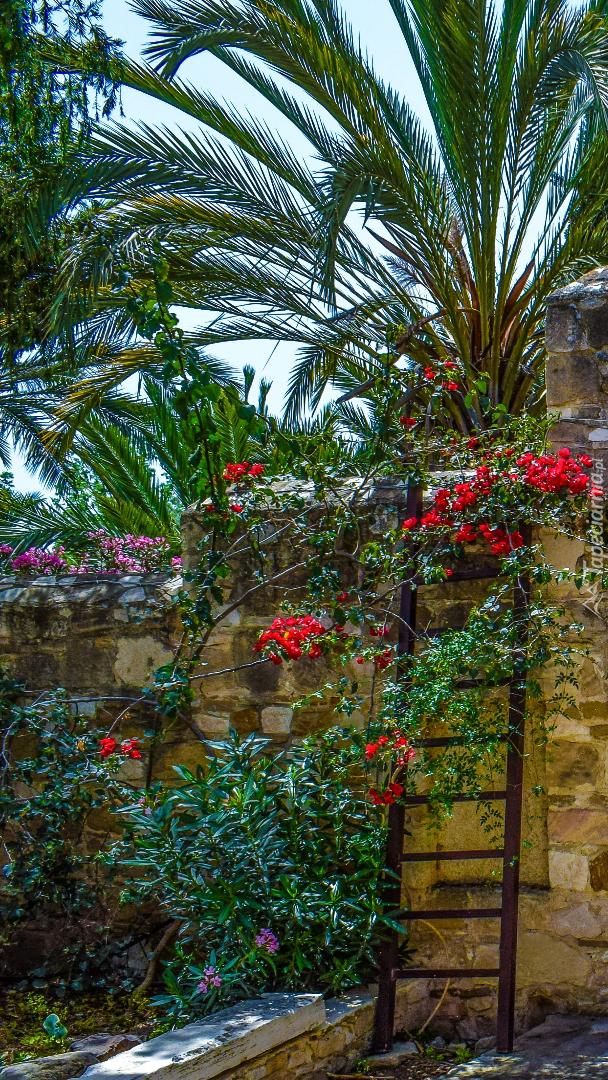 Palmy i kwiaty w ogrodzie