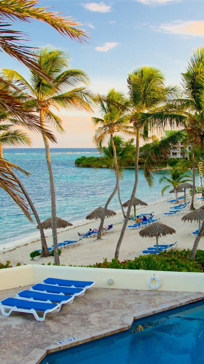 Palmy i leżaki na morskiej plaży