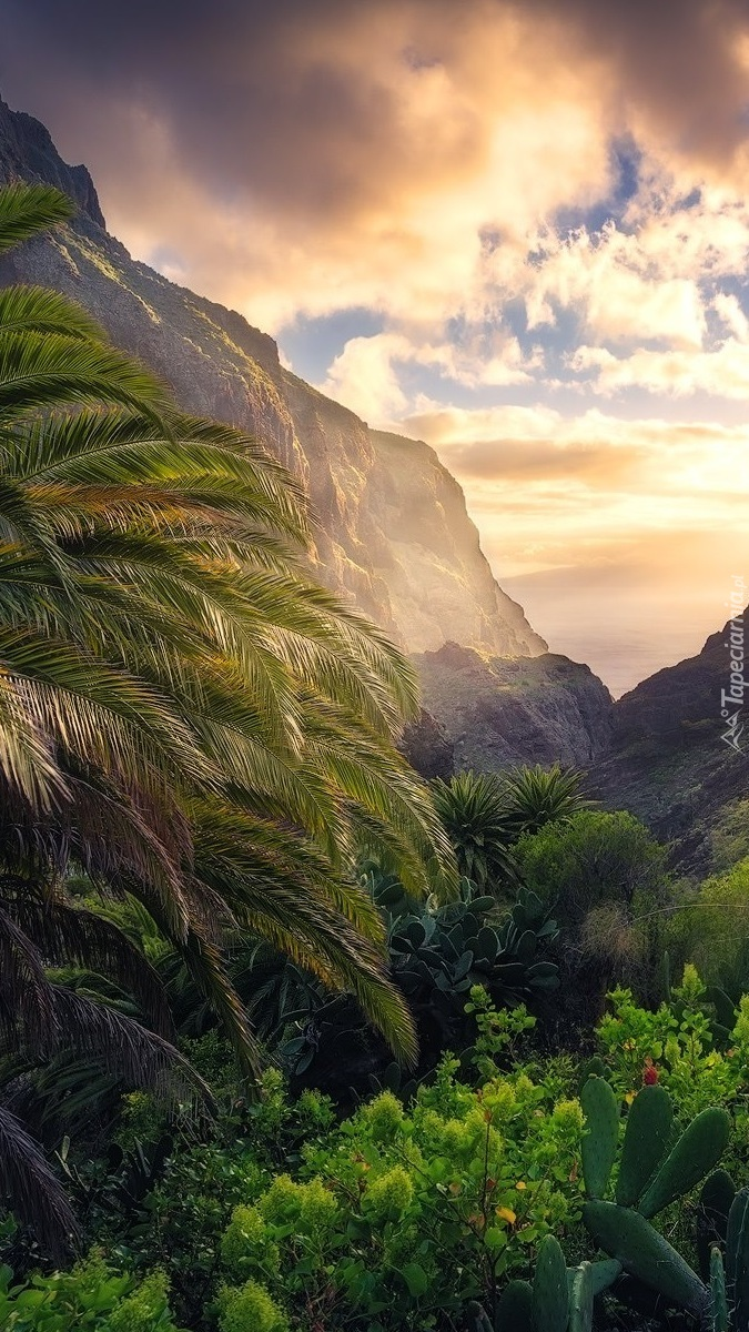 Palmy i roślinność w górach