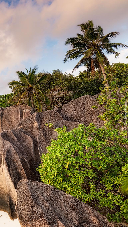 Palmy i skały na wyspie La Digue