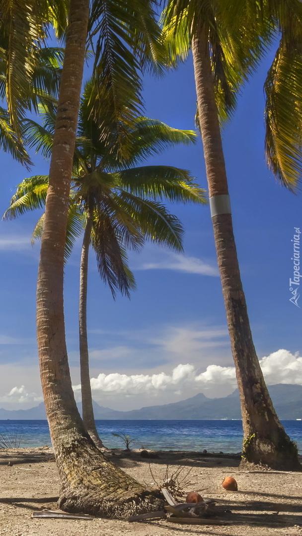Palmy kokosowe na wyspie Tahaa
