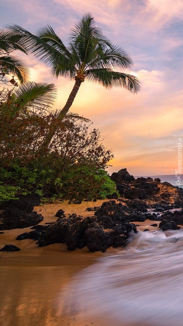 Palmy na morskiej plaży