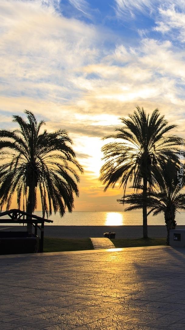 Palmy na nadmorskiej promenadzie