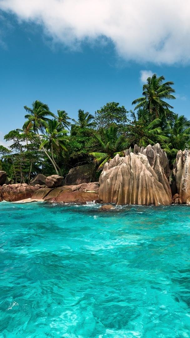 Palmy na skałach nad morzem
